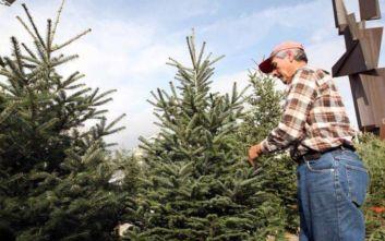 Θεσσαλονίκη: Στα περσινά επίπεδα οι τιμές του χριστουγεννιάτικου δέντρου