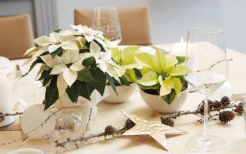 Οι πιο όμορφες ιδέες για να στολίσετε το τραπέζι των Χριστουγέννων με αλεξανδρινά