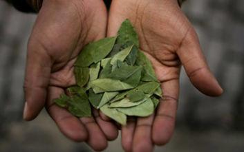 Παράνομες καλλιέργειες κόκας σε εκτάσεις 250.000 στρεμμάτων κατέστρεψαν οι αρχές στο Περού