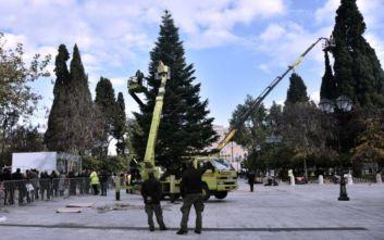 Σε ρυθμούς εορτών η Αθήνα: Στο Σύνταγμα το χριστουγεννιάτικο δέντρο