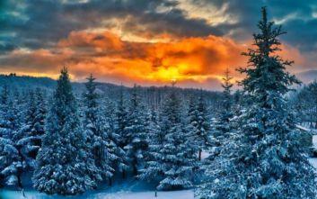 Οι Λετονοί διαλέγουν το χριστουγεννιάτικο δέντρο τους από το δάσος