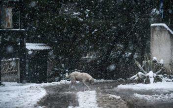 Αποχωρεί η κακοκαιρία Ζηνοβία με τσουχτερό κρύο, ο καιρός την Πρωτοχρονιά