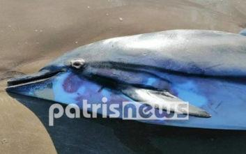 Νεκρό δελφίνι στο Κατάκολο
