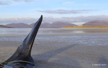 Εκατό κιλά σκουπιδιών μέσα στο στομάχι νεκρής φάλαινας