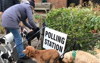 Εκλογές στη Βρετανία: Μαζική προσέλευση... σκύλων στα εκλογικά κέντρα