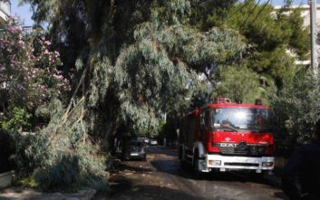 Πτώσεις δέντρων στη Θεσσαλονίκη λόγω της κακοκαιρίας