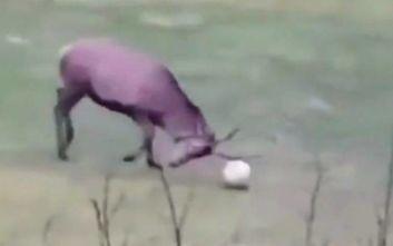 Ρόμα: Το... τερμάτισε με το viral ελάφι και το γκολ του Μανωλά