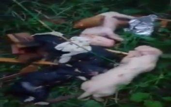 Κέρκυρα: Ασυνείδητος πέταξε σκυλάκια με σκοπό να πνιγούν