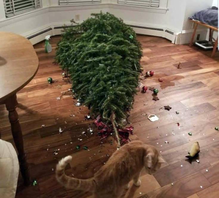 Χριστουγεννιάτικες αστοχίες και ατυχίες