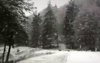 Χιόνια, ισχυροί άνεμοι και τσουχτερό κρύο: Εικόνες από τις περιοχές που ντύθηκαν στα «λευκά»