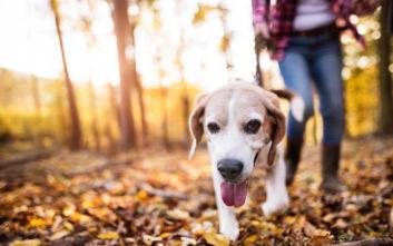 Πάτρα: Έβγαλε βόλτα το σκύλο της και κατέληξε διασωληνωμένη