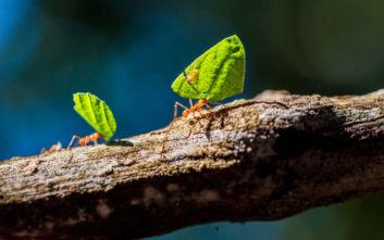 Ένα στα τέσσερα έντομα της ξηράς έχει εξαφανιστεί τα τελευταία 30 χρόνια