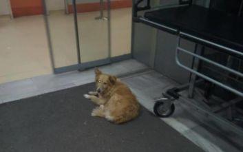Σκυλίτσα «Χάτσικο» στον Βόλο: Περιμένει πέντε χρόνια το αφεντικό της που πέθανε