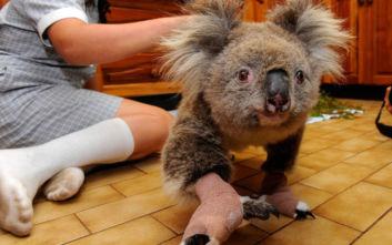 Ο όλεθρος των πυρκαγιών στην Αυστραλία έπληξε περισσότερο τα απειλούμενα είδη