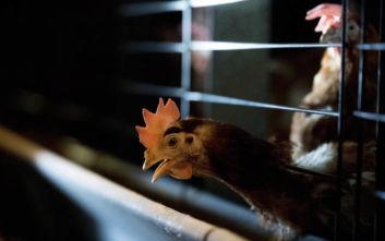 Δεύτερο κρούσμα της γρίπης των πτηνών μέσα σε μία εβδομάδα στην Ουγγαρία