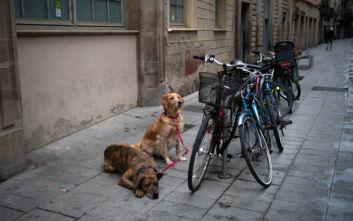 Απίστευτη φρίκη στην Ισπανία: Έκοβαν τις φωνητικές χορδές σκύλων για να μη γαβγίζουν