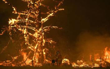 Πυρκαγιές στην Αυστραλία: Δεκαέξι διάσημοι που έβαλαν το χέρι στην τσέπη για να βοηθήσουν