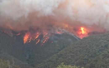 Η δραματική προειδοποίηση επιστημόνων για τις φωτιές στην Αυστραλία