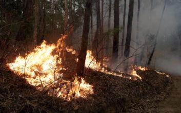 Αυστραλία: Συνετρίβη πυροσβεστικό αεροσκάφος - Τρεις νεκροί