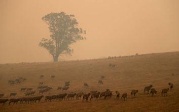 Μαζικές ακυρώσεις ταξιδιών στην Αυστραλία λόγω των πυρκαγιών, πλήγμα στον τουρισμό