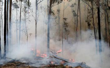 Αυστραλία: Υπό έλεγχο η μεγαλύτερη πυρκαγιά στη χώρα, αναμένονται και βροχές