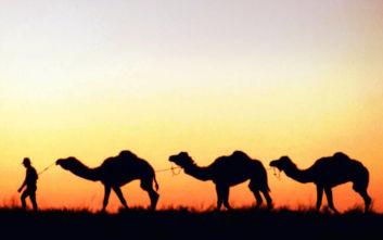 Αυστραλία: Ελεύθεροι σκοπευτές από ελικόπτερα σκότωσαν 5.000 καμήλες