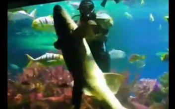 Δύτης χορεύει με… καρχαρία σε ενυδρείο μπροστά στα μάτια σοκαρισμένων θεατών