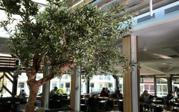 Public café restaurant: Τα κρασιά της βόρειας Ελλάδας στην καρδιά της Αθήνας