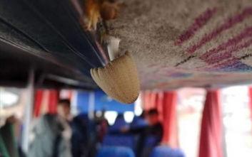 Φύτρωσε… μανιτάρι από τη μούχλα σε λεωφορείο που μεταφέρει μαθητές στην Κύπρο