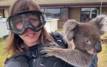 Επική φάρσα στην Αυστραλία: Έπεισαν δημοσιογράφο να φορέσει «πανοπλία» για να κρατήσει κοάλα