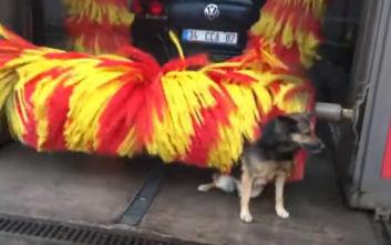 Σκύλος ανακαλύπτει τη βούρτσα του πλυντηρίου αυτοκινήτων