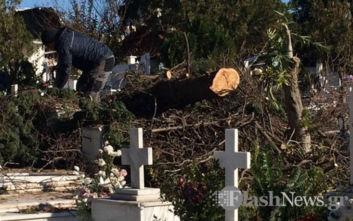 Δέντρο ξεριζώθηκε κι έπεσε πάνω σε τάφους στο νεκροταφείο στα Χανιά