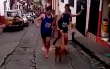 Δρομέας κλωτσάει σκύλο που πετάχτηκε μπροστά του κατά τη διάρκεια αγώνα δρόμου
