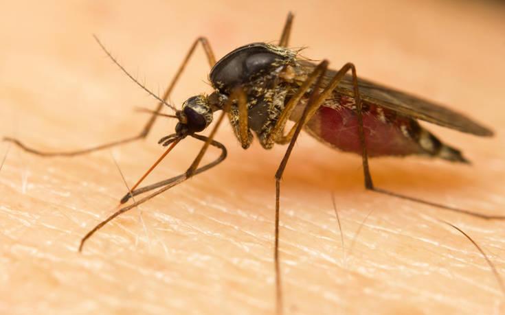 Τσίμπημα κουνουπιού είχε ανατριχιαστικό αντίκτυπο στον… όρχι
