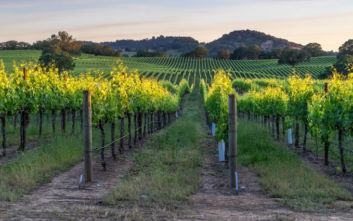 Το μέλλον του κρασιού και η απειλή της κλιματικής αλλαγής
