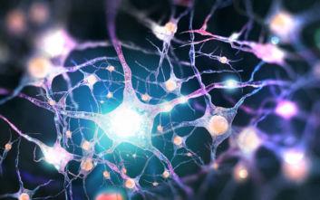 Επιστήμονες ανακάλυψαν τι είναι αυτό που μας κάνει ανθρώπους