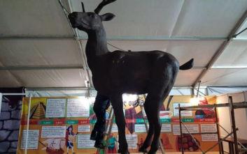 Κατερίνη: Έφτιαξαν ελάφι από σοκολάτα ύψους 4 μέτρων