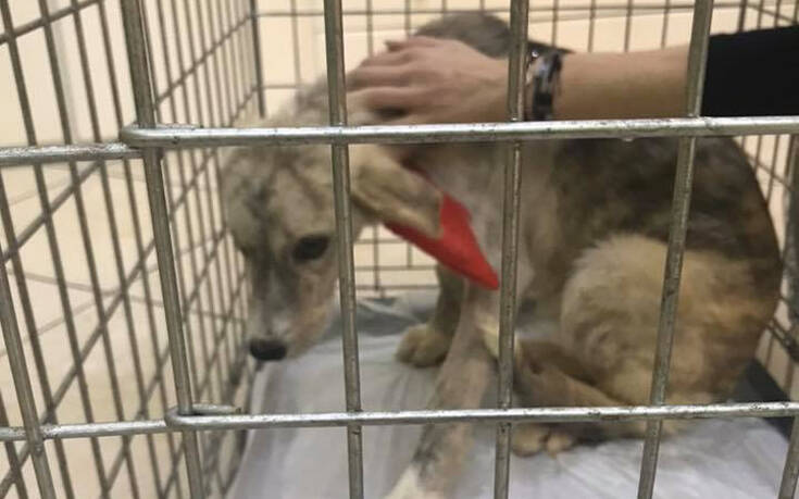 Φυλάκιση 15 μηνών με αναστολή και πρόστιμο 5.000 ευρώ για κακοποίηση σκύλου