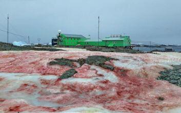 Γιατί βάφτηκε κόκκινος ο πάγος της Ανταρκτικής;
