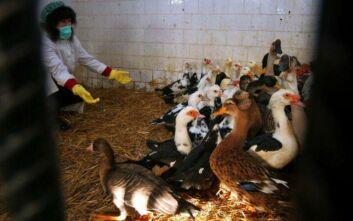 Γρίπη των πτηνών: Αυξανόμενα κρούσματα στην Βουλγαρία – Σε εγρήγορση οι ελληνικές αρχές