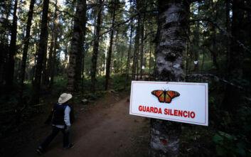 Εντοπίστηκε το πτώμα και δεύτερου οικολόγου μέσα σε μια εβδομάδα στο Μεξικό