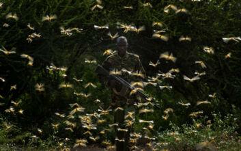 Επιδρομή από ακρίδες στη Σομαλία, σε κατάσταση έκτακτης ανάγκης η χώρα