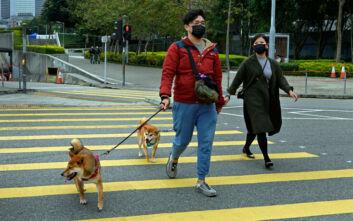 Κορονοϊός: Σκύλος βρέθηκε θετικός στον ιό Covid-19