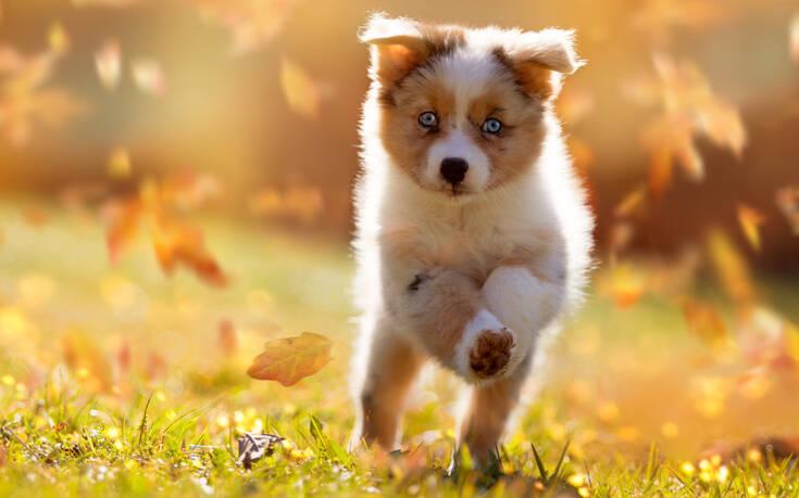 Απίστευτη κτηνωδία: Υιοθέτησαν σκυλάκι, το σκότωσαν και το έφαγαν
