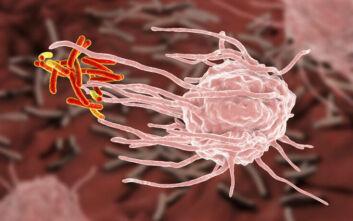 Τι παράξενο βρήκε νέα μελέτη για τα ανοσοκύτταρα