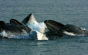 Μεταναστεύουν οι φάλαινες στους τροπικούς για να… αλλάξουν δέρμα;
