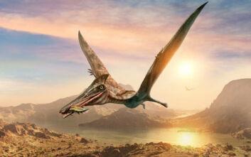 Ένα καλαμάρι με ένα δόντι πτερόσαυρου αποκαλύπτει πώς ήταν το κυνήγι πριν από 150 εκατ. χρόνια