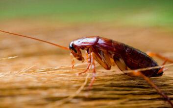 Ζωολογικός κήπος βαφτίζει κατσαρίδες με το όνομα του πρώην σας και τις κάνει τροφή ανήμερα του Αγίου Βαλεντίνου
