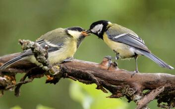 Κι όμως, τα πουλιά μπορούν να μάθουν τι πρέπει να τρώνε από την… τηλεόραση