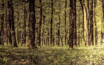 Ένα από τα ωραιότερα δάση του τόπου μας